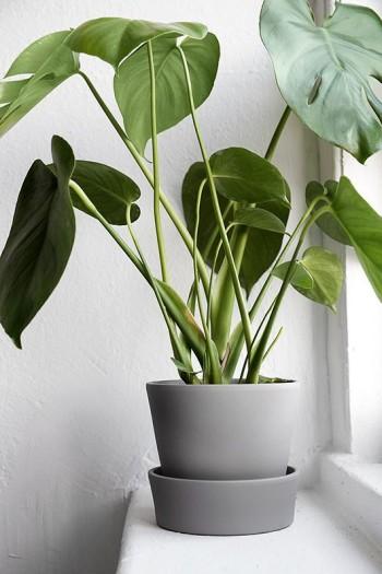 Health Benefits Of Indoor Plants Interior Plant D 233 Cor Tls